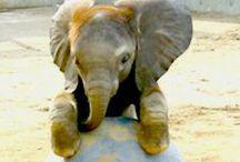 Elephants = Good Luck