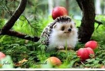Critter everything / Cute when small