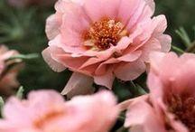 Flores, Folhagens - Alegria para a alma / by Andreia Lourenço