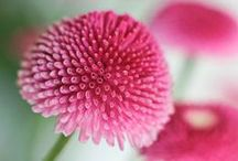 photography pink flowers