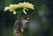 Yağmur - Rain / Yağmurdan saklanan hayvanlar...