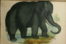 Josiah Wood Whymper - Animal Engravings / Animal History Lithographs, Zoology, Natural History Josiah Wood Whymper, Birds, Animals, Fishes, Reptiles