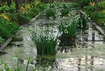 Wassergarten / Pflanzen für den Teichrand und feuchte Standorte. Einige Zwiebelblumen lieben feuchte Standorte. In der Natur wachsen sie häufig an Bachläufen oder am Seeufer - Schachbrettblume, Schwertlilie, Knotenblume... Blumenzwiebeln gibt's bei www.fluwel.de