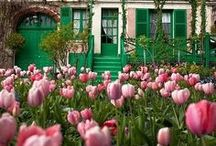 Vorgarten / Wir lieben einladende, grüne und vor allem blühende Vorgärten, die Bewohner, Nachbarn und Gäste mit angenehmen Düften und Farben willkommen heißen, in denen sich Bienen, Vögel und Schmetterlinge wohlfühlen und in denen man sich ganz seiner gärtnerischen Kreativität widmen kann. Blumenzwiebeln sind ideal, um für Blütenvielfalt rund ums Jahr zu sorgen. Hier findet Ihr Anregungen - die Zwiebeln und Knollen gibt's auf www.fluwel.de