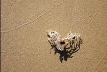 Shells,Surf,Sand&Sun