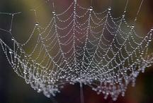 Webs&Lace