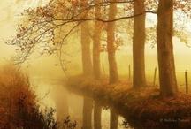 Misty Moments ************** / Mist,Fog,Steam&Haze make for an interesting moment!!!!