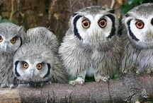 Owls, What a Hoot?????