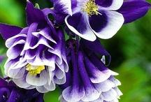 Flowers of 180....