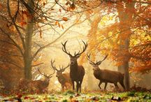 Forest & Woodland  Creatures