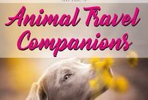Animal Travel Companions / Your guide to Animal Travel Companions. All you need to know, when you travel with dogs, cats or others.