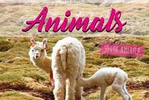 Animals South America / Pictures & Stories about Animals in South America