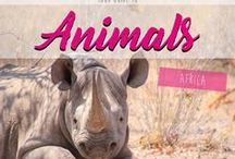 Animals Africa / Pictures & Stories about Animals in Africa