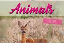 Animals Europe / Pictures & Stories about Animals in Europe
