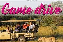 Game Drive / Your guide when you want to make a Game Drive in Africa.