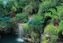 .magical gardens.
