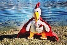 Chicketto - il guest relation del #chickenco , il primo #gastropub del trentino