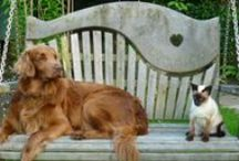 Dogs & Cats on Swing Seats