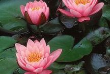 Beautiful flowers, plants, gardens