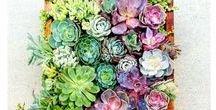 Plants & Gardening / Tips for Gardening, planting. Indoor and outdoor plants. #gardening #plants #diy