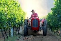Agritourism in Dubrovnik / Agritourism – Eco Tourism in Lovorno, Konavle, Croatia. Vineyards & Wine production, Olive Trees & Oil production, Organic Fruits & Vegetables, Authentic Souvenirs. The Rural Club Lovorno
