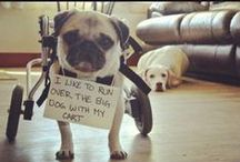 Dog Shaming / My new favorite for time-killing.