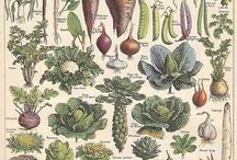 Growing food / Growing your own vegetables and fruit can be so rewarding. And frustrating and annoying and exhausting and satisfying and wonderful and…