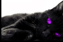 Machiaj ochi