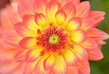 Flower Beauty / Flowers, i love them. Their beauty, color, shape, texture, aroma.