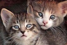 Kitty cat & Animals