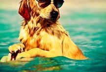 Puppies/dogs / This board will have lots of fun and cute pictures of puppies and dogs so I hope u enjoy!
