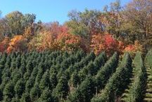 Hill Farms Christmas Trees / We sell Fraser, Douglas, Concolor, Nordman & Turkish fir Christmas trees for both wholesale and retail. For more information visit www.hillfarms.com.