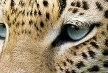 Animal Photography / by Brandy Ferris