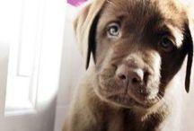 animais / Nada mais lindo no mundo duque animais fofinhos e lindinhos!!!