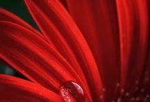 Ready for Red / Red symbolizes - Love - Passion - Anger and Danger  - Brick, Burgundy, Crimson, Garnet, Ruby, Scarlet