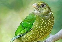 Graceful Green ::  Nature Too
