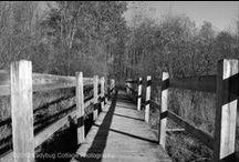 Black & White Images / Landscapes & architectural images from Ladybug Cottage Photography