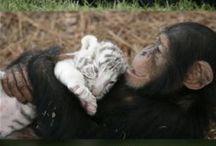 Animals/Baby Animals / SOOO CUTE