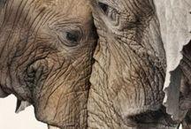 olifanten.