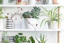 Plants Deko
