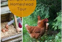 Urban Homesteading / Ideas for urban homesteading because I WILL have a self-sufficient farm someday when I retire. Yes!