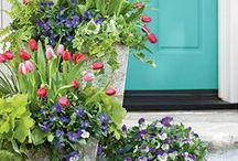 Gardening / How does your garden grow! See the gardening tips, plants and DIY garden projects that inspire me! Ideas for building, planting and decorating gardens for spring, summer, fall and winter. / by Setting for Four
