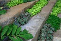 Steps / Steps in the garden