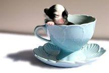 Tea Pots, Cups & China