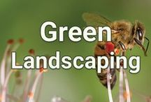 Green Landscaping / Be environmentally friendly and create gardens for birds and butterflies that are natural and healthy.