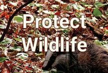 Protect Wildlife / Protect native species of plants and wildlife and their habitats.