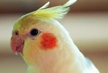 Colorful Birds / Each is a piece of art, different sharp color combination and contrast, even various eye-lines!!!!