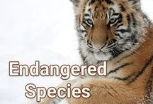 Endangered Species / Endangered species in Canada and the world.