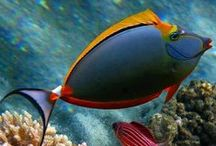 Sea Life / Sea creatures, colors and patterns