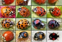 Insects / amazing, strange or beautiful insects